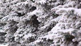 Flaumig aß im Schnee an einem Wintertag lizenzfreies stockbild