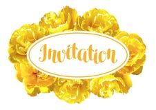 Flaumige gelbe Tulpen der Einladungskarte Schöne realistische Blumen und Knospen Stockbilder