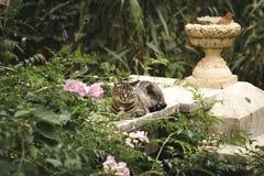 Flaumige gestreifte Katze Lizenzfreies Stockfoto
