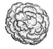 Flaumige Herbstblume der Skizze Lizenzfreies Stockbild