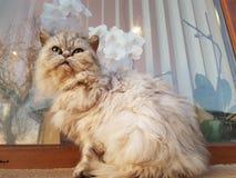 Flaumige Katze stockbild