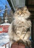 Flaumige Katze Stockfotografie