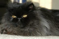 Flaumige Katze 4 Stockfoto