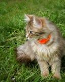 Flaumige Katze stockfotos