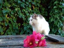 flaumige Katze auf dem Hintergrund einer Kletterpflanze lizenzfreie stockfotografie