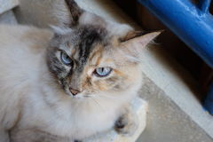 Flaumige Katze auf den Halt stockbild