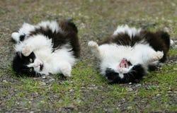 Flaumige Katze rollen vorbei Lizenzfreie Stockbilder