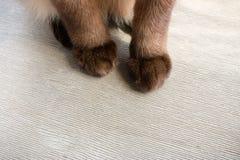 Flaumige Katzentatzen auf einem hölzernen Stockbild