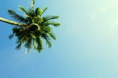 Flaumige Palmekrone auf sonnigem Hintergrund des blauen Himmels Film- Effekt tonte Foto lizenzfreie stockfotografie