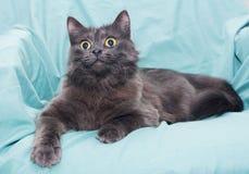 Flaumige rauchige schwarze Katze mit gelben Augen Lizenzfreie Stockbilder