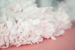 Flaumige rosa Pfingstrosen blühen schönen Hintergrund des Blumenstraußes stockfotos