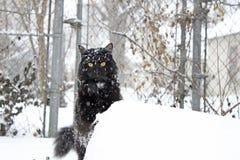 Flaumige schwarze Katze im Schnee Lizenzfreie Stockfotos