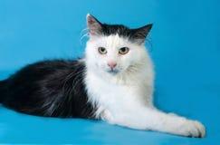 Flaumige weiße Katze mit schwarzen Flecken liegt auf blauem Hintergrund Lizenzfreie Stockfotografie