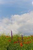 Flaumige Wolken über Wildflowerfeld Lizenzfreies Stockbild