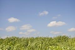 Flaumige Wolken des Frühjahrhintergrundes und blaue Himmel Stockbild