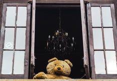 Flaumiger Bär, der aus dem Fenster heraus schaut Lizenzfreies Stockbild