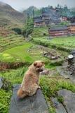 Flaumiger, gelber Welpe, der auf einem Stein im chinesischen Dorf sitzt. Lizenzfreies Stockbild