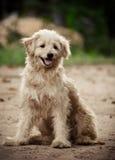 Flaumiger Hund lizenzfreie stockfotografie