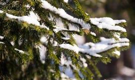 Flaumiger milder Schnee liegt auf einer Weihnachtstannenbaumniederlassung stockbilder