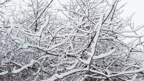 Flaumiger Schnee auf schwarzen Niederlassungen im Winter Lizenzfreie Stockfotografie