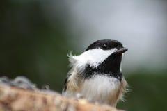 Flaumiger Vogel Lizenzfreie Stockfotos