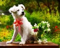 Flaumiger weißer Welpe mit Vase des Jasmins und der Gartennelke blüht auf dem Sommergartenhintergrund Stockfotografie