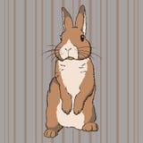 Flaumiges braunes stehendes Kaninchen Stockbild