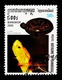 flavomarginata Giallo-marginato di Cuora della tartaruga di scatola, mostra internazionale BANGKOK 2000 del bollo: Serie delle ta Immagine Stock