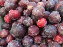 Flavor King pluot, Prunus 'Flavor King' Stock Photography