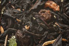 Flavored tea with pieces royalty free stock photo