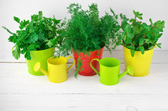 Flavoring greens in buckets Stock Images