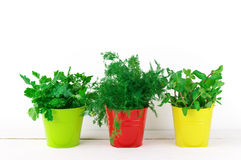 Flavoring greens in buckets Stock Photos