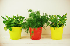 Flavoring greens in buckets Royalty Free Stock Photo
