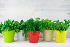 Flavoring greens in buckets. Bunches of flavoring greens, lettuce and spinach in colorful metallic buckets on rustic wooden background stock image