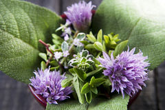 Flavors Of Herbs Stock Photography