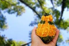 flavovirent необыкновенный овощ Стоковое Изображение