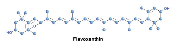 Flavoxanthin is a natural xanthophyll. Pigment with a golden-yellow color found in small quantities in a variety of plants Royalty Free Stock Photo