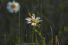 Flawers amarillo Imagenes de archivo
