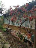 Flawers das rosas velhos e casa acolhedor imagens de stock