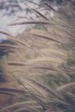 Flawers de la hierba de la misión archivados Fotografía de archivo