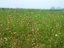 flax fotos de stock