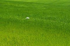 flax fotografia de stock