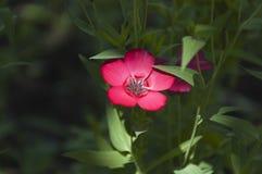 flax fotos de stock royalty free