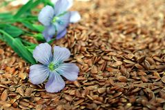 Flax from blue flowers on seeds Stock Photography