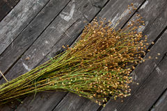 Flax bunch Royalty Free Stock Photography