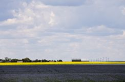 Flax and canola crop Stock Image