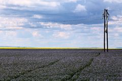 Flax and canola crop Royalty Free Stock Photos