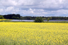 Flax and Canola fields Manitoba Stock Photography