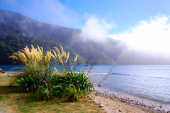 Flax and cortaderia grasses. New Zealand flax and cortaderia grasses at Ships Point in Marlborough Sound - the start of the Queen Charlotte track. Taken as the Royalty Free Stock Photos