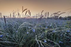 Flax and feather grass on sunrise stock photo